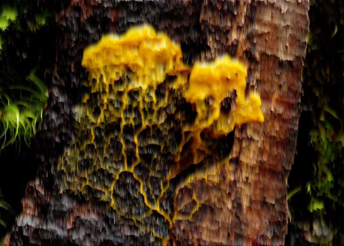 NaturSlime w/ Ben Woodard